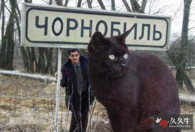 乌克兰巨猫是真是假