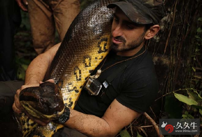 蟒蛇吃人全过程