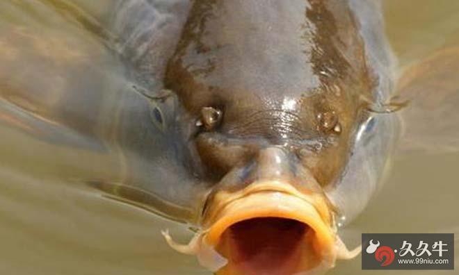 用鱼撸管视频高清图