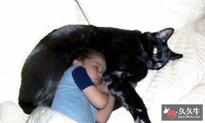 乌克兰巨猫angie是真的吗